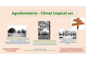 Agroforesterie et changement climatique