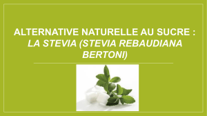 Alternative naturelle au sucre, Stevia rebaudiana Bertoni.