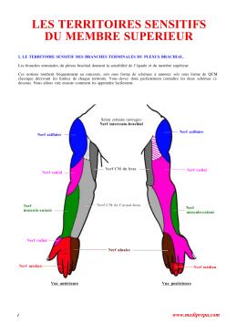 anatomie clinique pierre kamina pdf