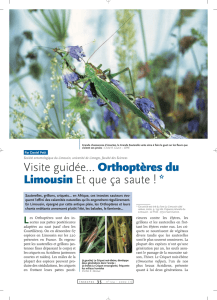 Orthoptères du Limousin / Insectes n° 124
