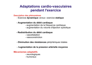 Adaptations cardio-vasculaires pendant l`exercice