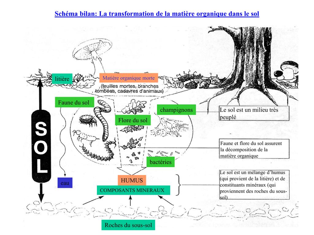 Schéma bilan: La transformation de la matière organique dans le sol