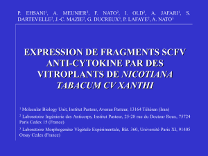 expression de fragments scfv anti-cytokine par des vitroplants de