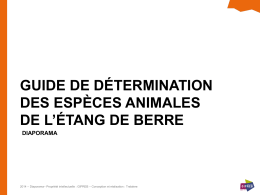 guide de détermination, web