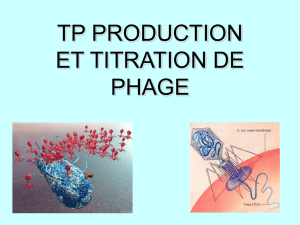 tp phages