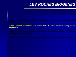 LES ROCHES SILICEUSES