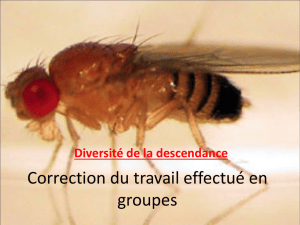 Correction du TD brassage intrachromosomique