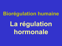 Nerve activates contraction