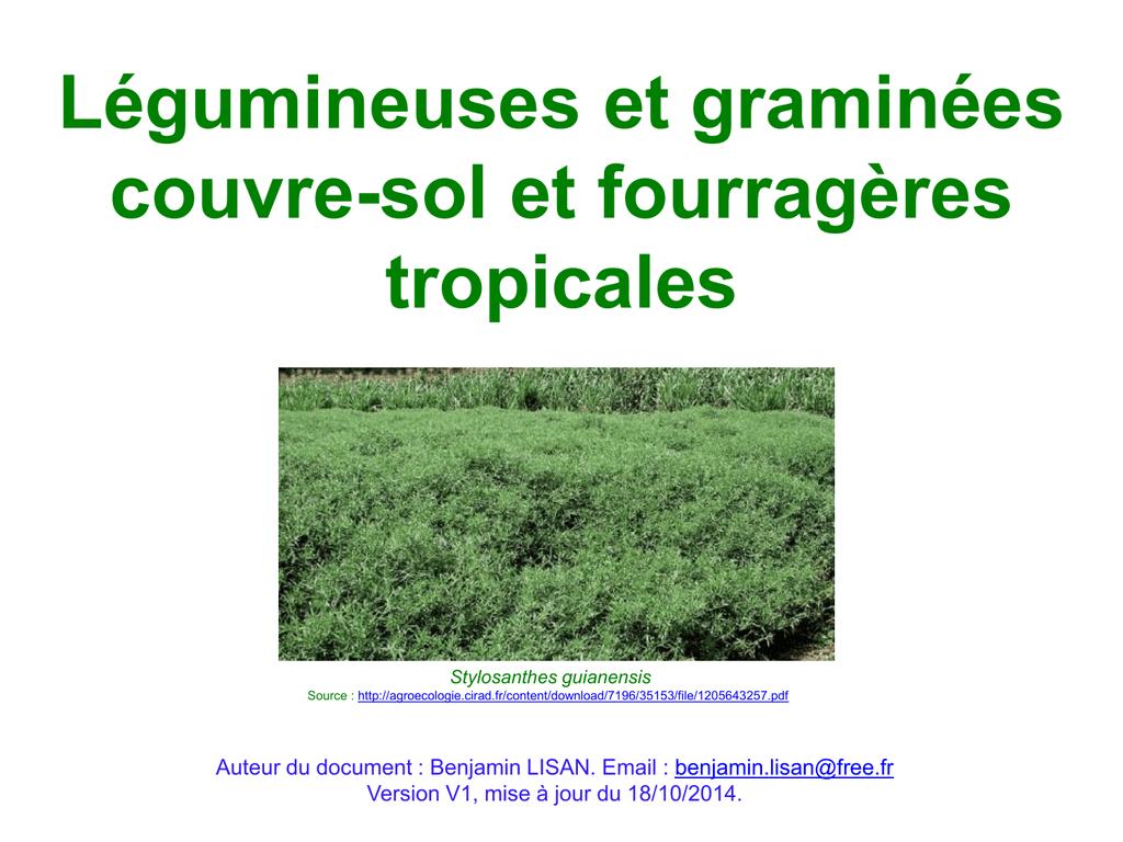 Couvre Sol Croissance Rapide plantes couvre-sol et fourragères tropicales