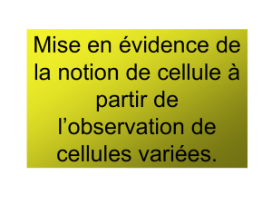 cours 2nde cellule