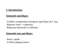 Les lymphocytes