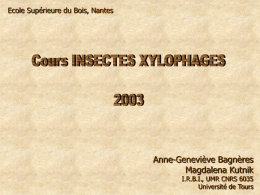 cours insectes xylophages