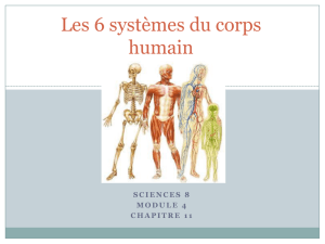 Systemes du corp revised 2012 - Mlle Norman