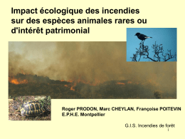 Tortue d `Hermann L` - Incendies de Forêts