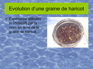 Evolution d`une graine de haricot - Académie de Nancy-Metz