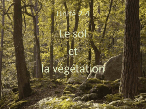 Power point vegetation - Site de cours de monsieur Langevin
