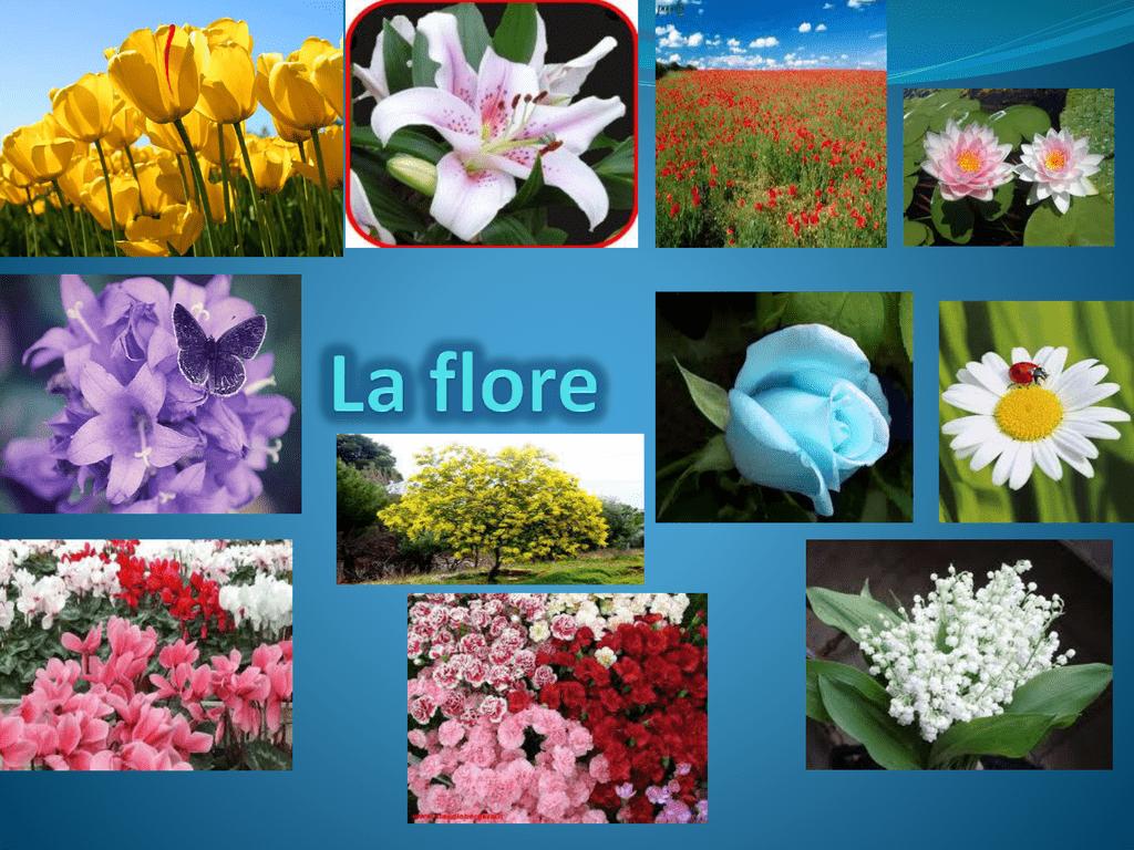 Graines De Fleurs Qui Poussent Très Vite la flore