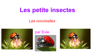 Les petite insectes - Authentic Science