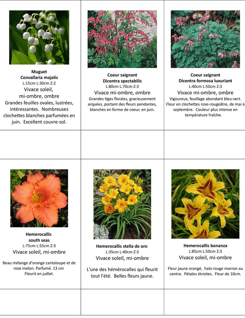 Fleurs Pour Mi Ombre liste des vivaces - fleurs