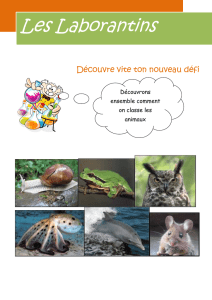 A9_CM_plan sur la classification des animaux