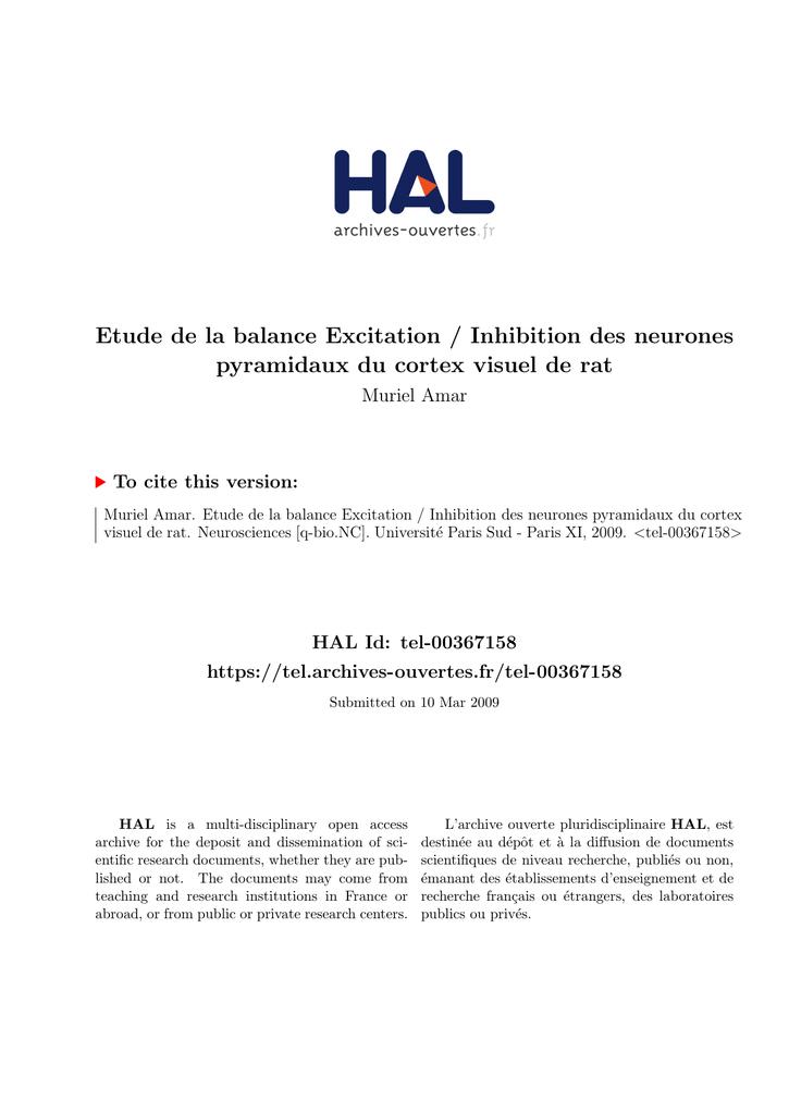 De Pyramidaux Etude Des Balance Neurones La Excitationinhibition vyPNnwOm08