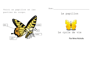 Le papillon Le cycle de vie