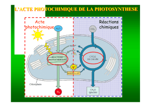l`acte photochimique de la photosynthese