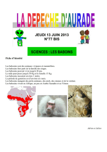 sciences : les baboins