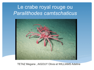 Le crabe royal rouge ou Paralithodes camtschaticus