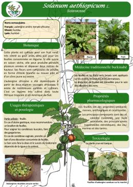 Telechargez le pdf for Plante yucca chat
