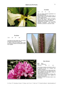 Photos et descriptions de 6 rhododendrons.