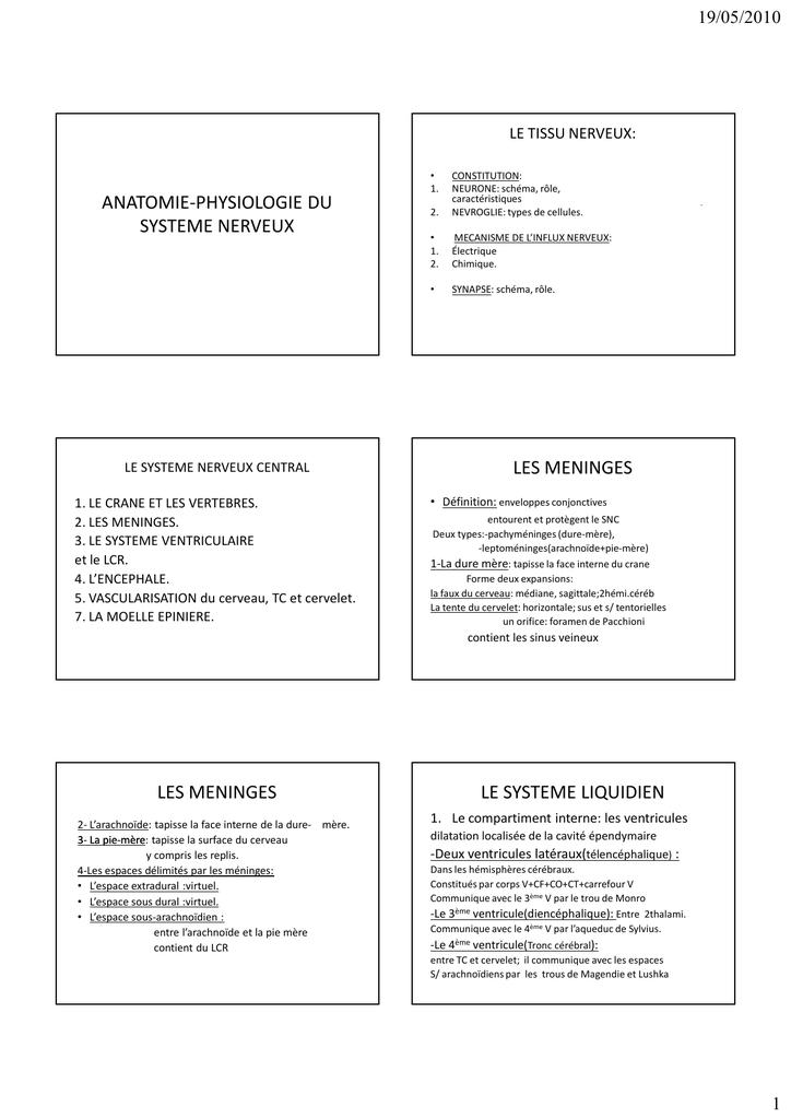 Beste Anatomie Und Physiologie Der Zerebralparese Ideen ...