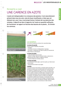 une carence en azote - Perspectives Agricoles