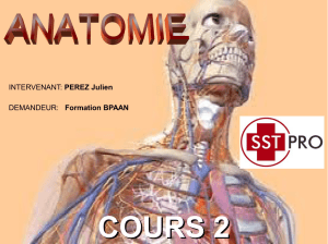 anatomie-2015-cours