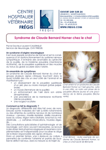 Syndrome de Claude Bernard Horner chez le chat