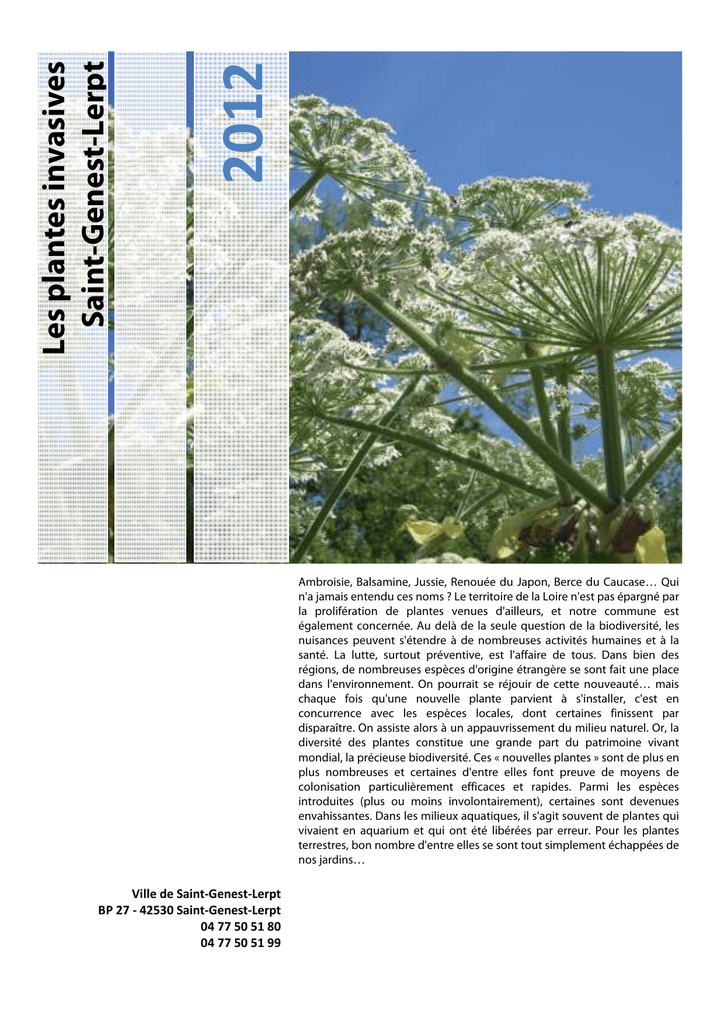 plante sinvasives - Ville de Saint Genest Lerpt