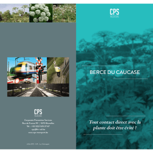 Berce du caucase - Corporate Prevention Services