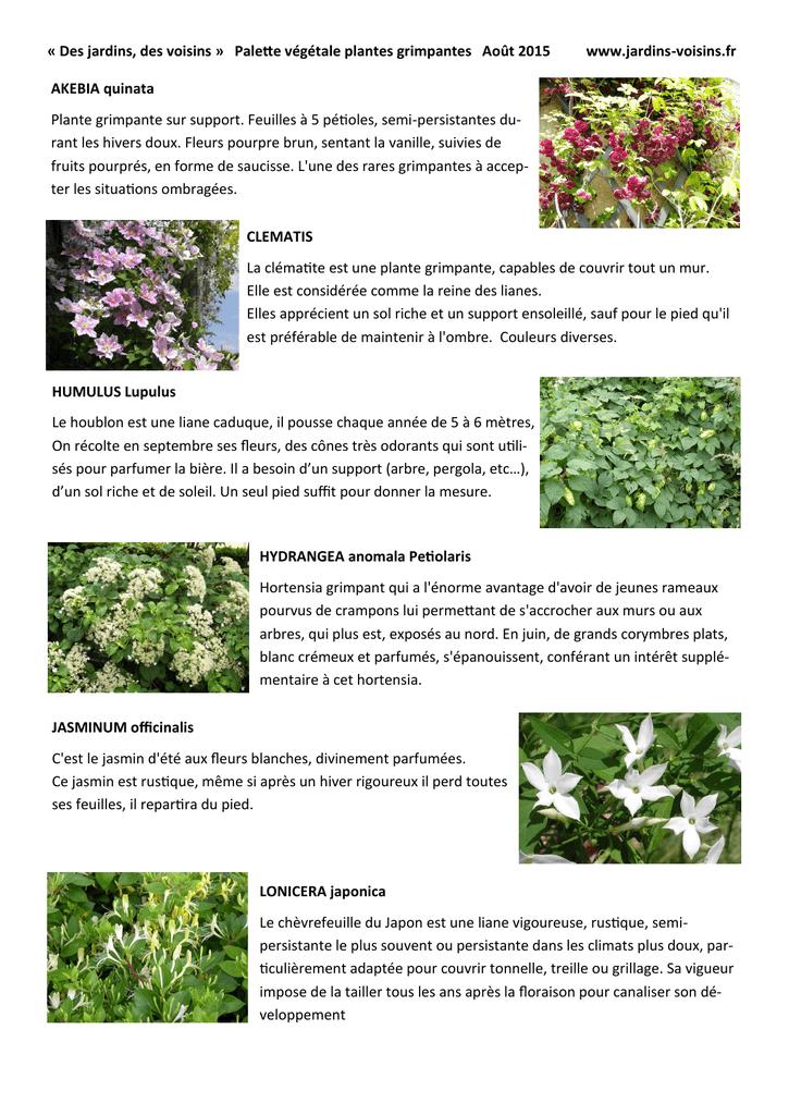 Des Jardins Des Voisins Palette Vegetale Plantes Grimpantes