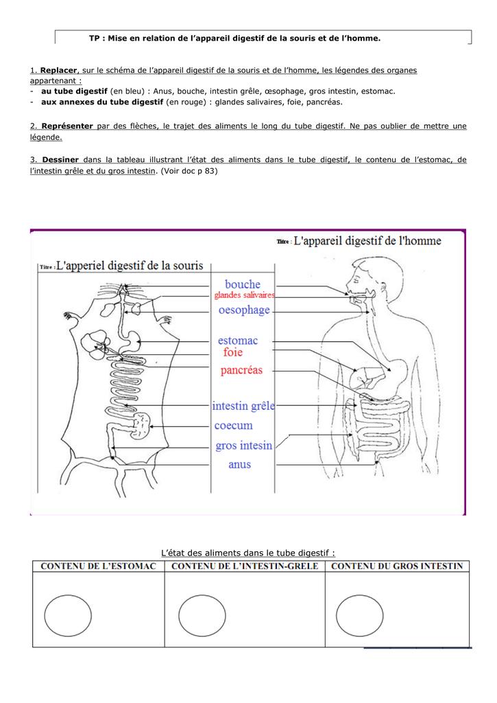 LE CORPS HUMAIN CM 4 SEANCES La digestion