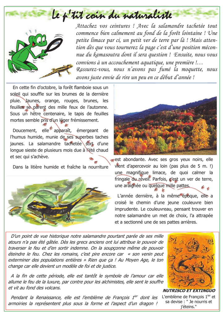 Salamandra salamandra - Fédération Aude Claire