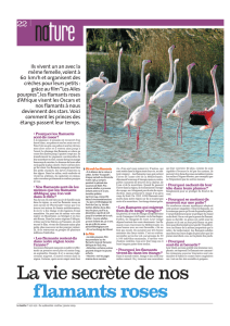 La vie secrète de nos flamants roses
