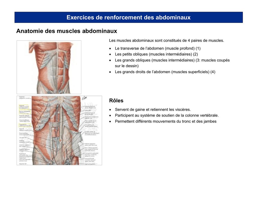 Atemberaubend Makroskopische Anatomie Des Abdomens Zeitgenössisch ...