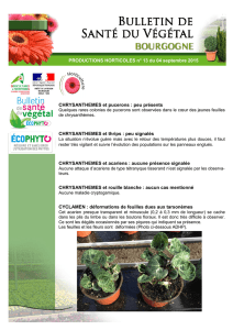 PRODUCTIONS HORTICOLES n° 13 du 04 septembre 2015