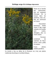 Graines Papaver rupifragum exquis double orange fleurs de pavot pour mois 100