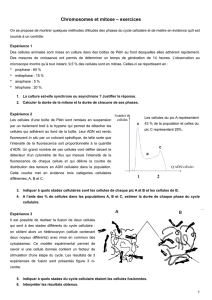 Chromosomes et mitose – exercices