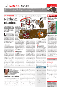 Ni plante, ni animal… - Bourgogne