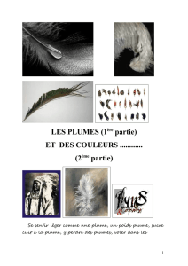 EXPOSE PLUMES - Ornithopassion Gelos Pau