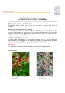 ROUILLE DES MYRTACEES (Puccinia psidii)