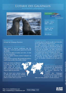 Fiches especes Colleges – l`Otarie des Galapagos