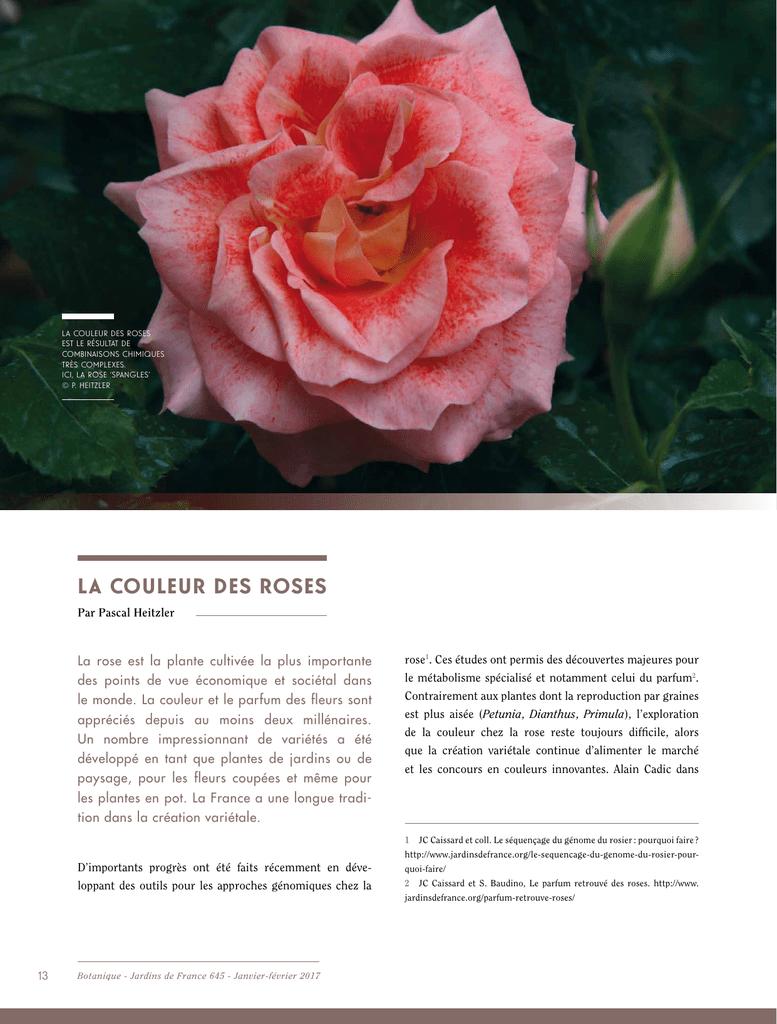 Faire Un Rosier Avec Une Rose télécharger - jardins de france
